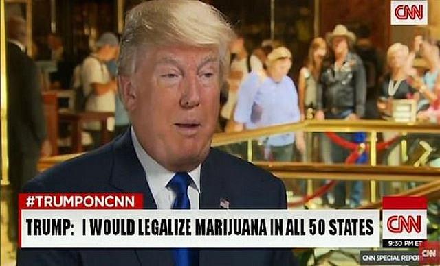Trump Legalize
