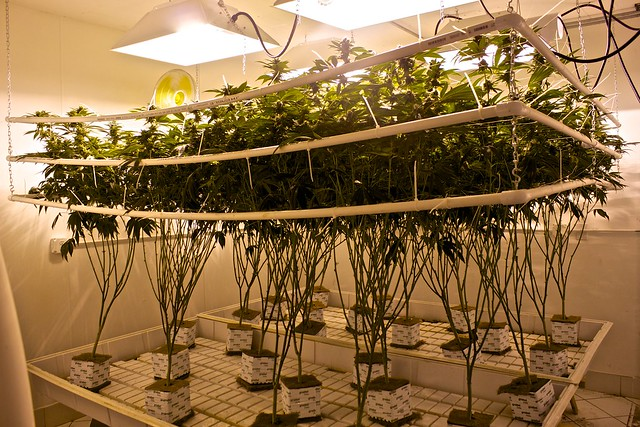 Using Led Grow Lights To Grow Your Plants Indoors